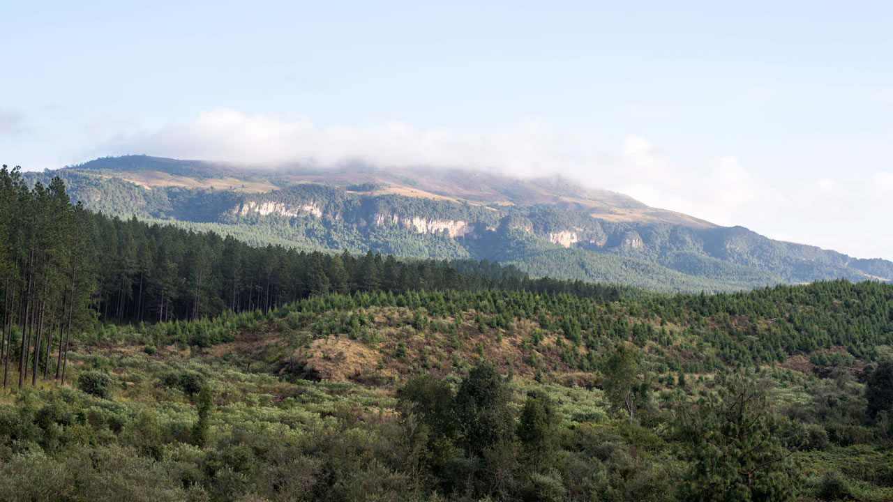 Getting to know south africas forests forestry explained natural forests cover around a third of all land on earth they are our planets lungs taking in carbon dioxide co2 a major greenhouse gas publicscrutiny Images