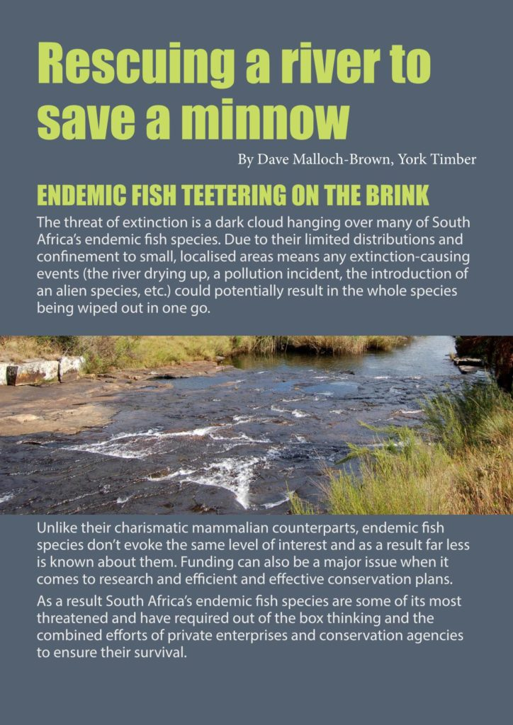 http://forestryexplained.co.za/wp-content/uploads/2017/12/YORK-MINNOWS-TALE-WEB-VERSION_002-724x1024.jpg