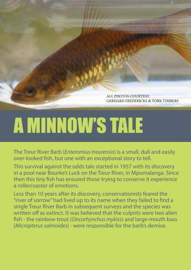 http://forestryexplained.co.za/wp-content/uploads/2017/12/YORK-MINNOWS-TALE-WEB-VERSION_003-724x1024.jpg