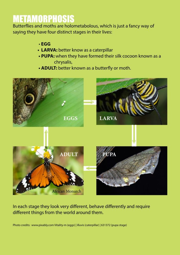 https://forestryexplained.co.za/wp-content/uploads/2018/01/Butterflies-Sappi-003-724x1024.jpg
