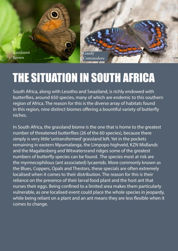 https://forestryexplained.co.za/wp-content/uploads/2018/01/Butterflies-Sappi-008-724x1024.jpg