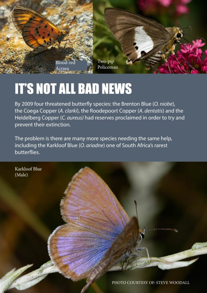 http://forestryexplained.co.za/wp-content/uploads/2018/01/Butterflies-Sappi-009-724x1024.jpg