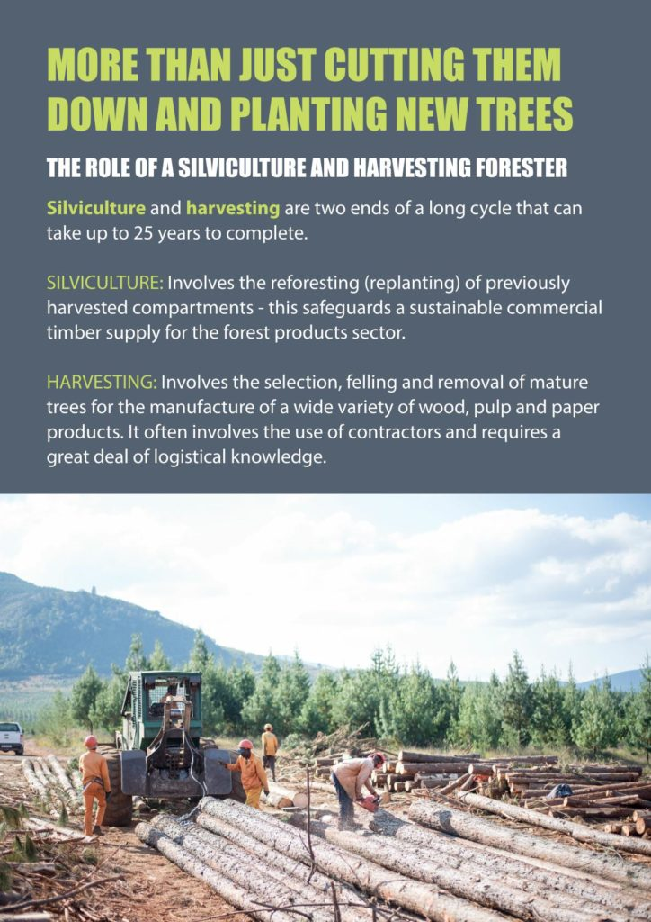 https://forestryexplained.co.za/wp-content/uploads/2018/03/Silviculture-002-724x1024.jpg