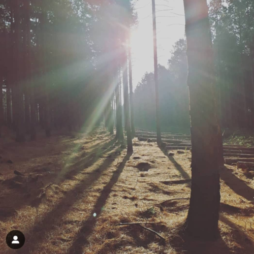 #ForestryFriday setting Instagram alight