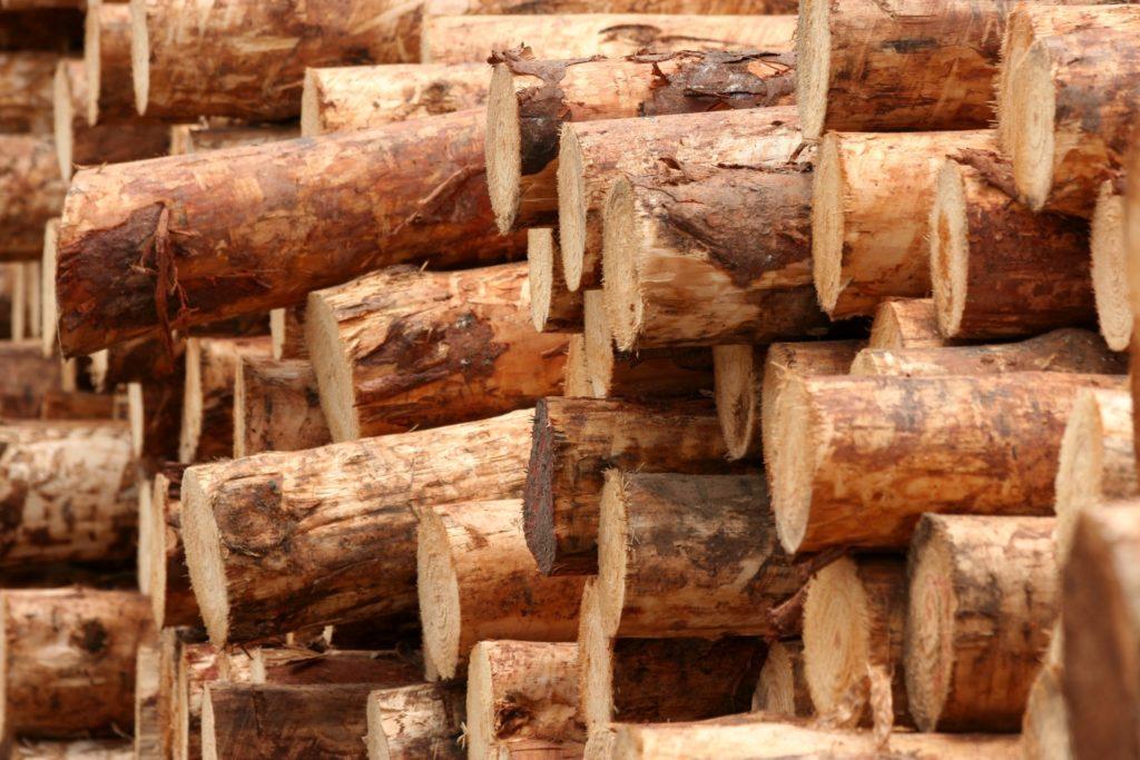 Sappi_Ngodwana_timber